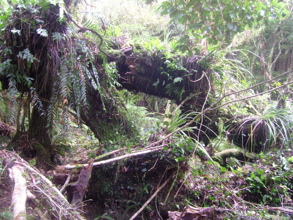 off road aotearoa allen tree covering path